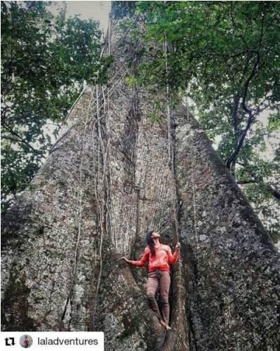 Guardián de la Selva