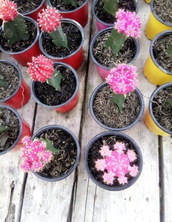 Vivero Las Orquideas Del Putumayo
