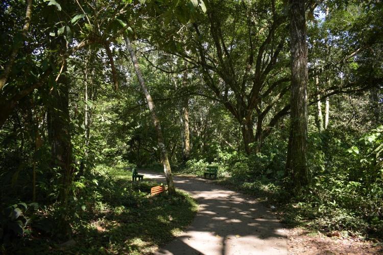 Sendero Ecológico La Hormiga – Valle del Guamuez